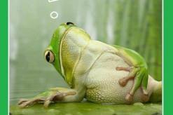 verde broasca